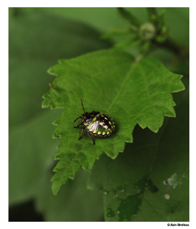 Question pour un champion (Tétaprime par exemple) Bug