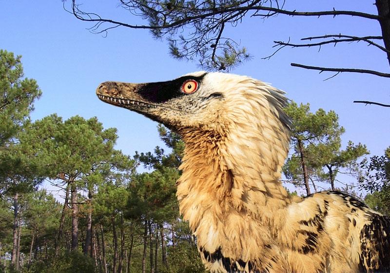 Bracelet  RR Velociraptor_mongoliensis